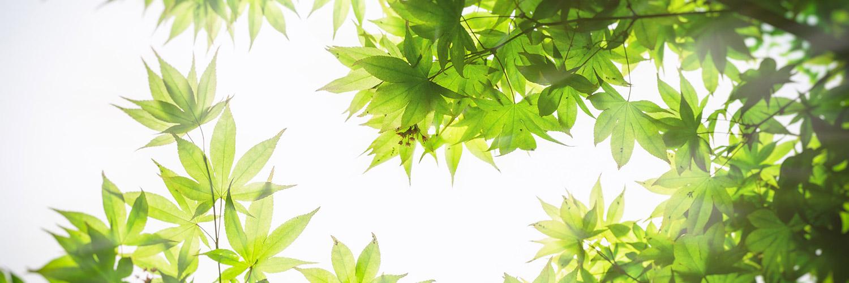 Slide_green1